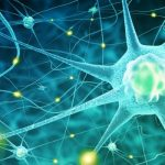 Neurons Tell Brain When to Stop Drinking