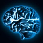 Researchers identify protein that boosts memory