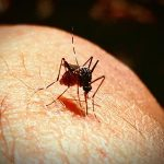 Malignant malaria claims first life, dengue rages on
