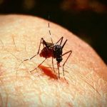 Lanka malaria-free, but India to take much longer