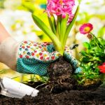 Is the obesity solution in the garden?