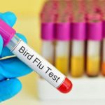Bird Flu: Centre Asks NIHSAD to Expedite Testing of Samples