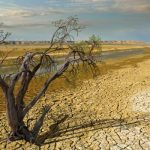 Climate Change Affects Nearly All Life on Earth