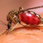 Chikungunya cases in Mumbai touch 5-year high