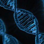 Immune molecule deficiency increases risk of Epstein-Barr