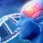 Brain Activity May Predict Risk of Falls in Elderly