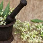 6 Everyday Ayurvedic Herbs That May Protect You From the Risk of Cancer