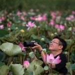 After a 10-year gap, lotuses bloom in national park near Bangkok