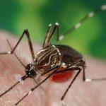 Zika Probably Not Spread Through Saliva: Study