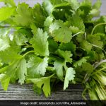 Herbs for Detoxification: Cleanse Your Body from Within