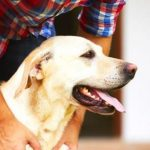 Getting a dog may save your life, especially if you're single