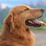 How to fly with a dog: Tips for traveling safely with your pet