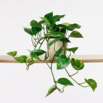 The Crucial Health Benefits of Keeping Indoor Plants in Office