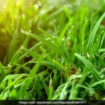Walk Barefoot On The Grass, It Can Improve Your Health